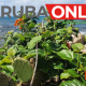 Black Friday In Aruba